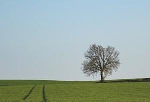 mutuo acquisto terreno agricolo
